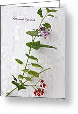 Bittersweet Nightshade Greeting Card
