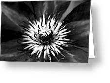 Black And White Clematis Greeting Card