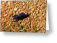 Black And Blue 2 Greeting Card