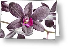 Black And Purple Orchid Greeting Card