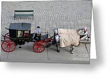 Black And Red Horse Carriage - Vienna Austria  Greeting Card