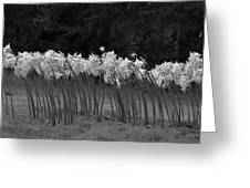 Black And White Amaryllis Greeting Card by Denice Breaux