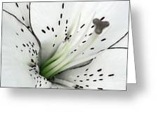 Black And White And A Little Bit Of Green Greeting Card