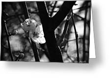 Black And White Appleblossom Greeting Card