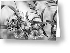 Black And White Asters Greeting Card