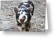 Black And White Baby Pig Greeting Card