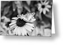 Black And White Butterfly Greeting Card by Debbie Sikes
