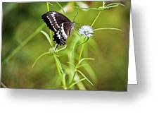 Black And White Butterfly V3 Greeting Card