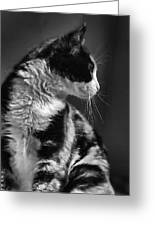 Black And White Cat In Profile  Greeting Card
