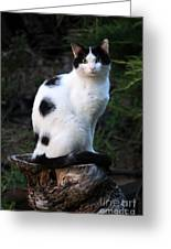 Black And White Cat On Tree Stump Greeting Card