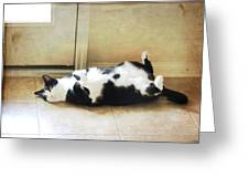 Black And White Cat Reclining Greeting Card