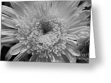 Black And White Chrysanthymum Greeting Card