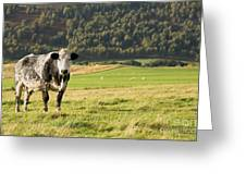 Black And White Cow Greeting Card