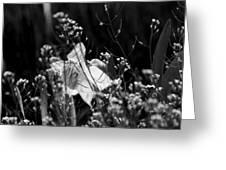Black And White Daffodil Greeting Card
