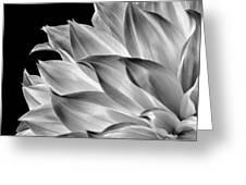 Black And White Dahlia Greeting Card