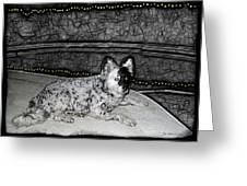 Black And White Dog Greeting Card