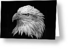 Black And White Eagle Greeting Card