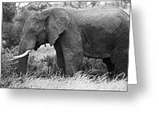 Black And White Elephant Greeting Card