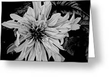Black And White Floal Greeting Card