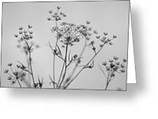 Black And White Floral Silhouettes Greeting Card