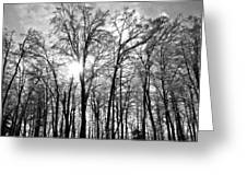 Black And White Forest Greeting Card