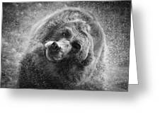 Black And White Grizzly Greeting Card