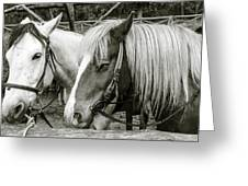 Black And White Horses. Greeting Card