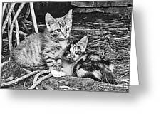 Black And White Kittens Greeting Card