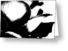 Black And White Layers Of A Rose  Greeting Card