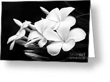 Black And White Lightning Greeting Card