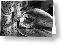 Black And White Lily Up Close Greeting Card