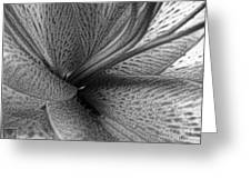 Black And White Lily Z Map L Greeting Card