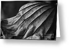 Black And White Lotus Leaf Greeting Card