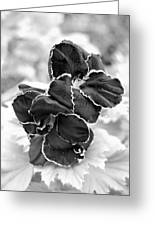 Black And White Maui Flowers Greeting Card