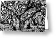 Black And White Maui Tree Greeting Card