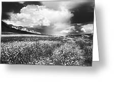 Black And White Meadow Greeting Card