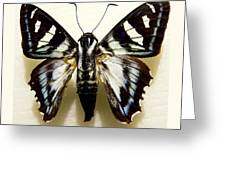 Black And White Moth Greeting Card