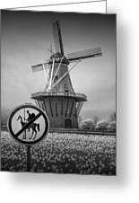 Black And White No Tilting At Windmills Greeting Card
