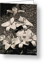 Black And White Orchids Greeting Card
