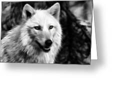 Black And White Painted Wolf Greeting Card