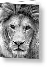 Black And White Portrait Of A Lion Greeting Card