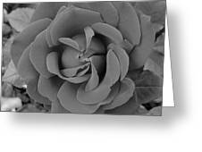 Black And White Rose 1 Greeting Card