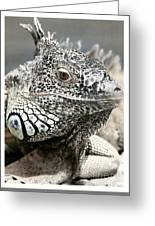 Black And White Saurian Animal Nature Iguana Greeting Card