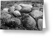 Black And White Seashells Greeting Card
