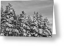 Black And White Snow Covered Trees Greeting Card