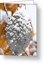 Black And White Snow Leaf Greeting Card