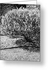 Black And White Spring Greeting Card