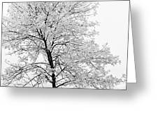 Black And White Square Tree  Greeting Card