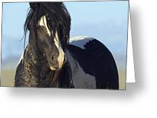 Black And White Stallion Comes Close Greeting Card