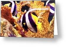 Black And White Striped Angelfish Greeting Card